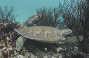 tour de snorkel en akumal desde cancun