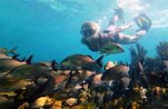Tour De Snorkel En Puerto Morelos Desde Cancun