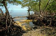 Tour Eco Turístico En Lancha Desde Campeche